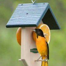 Diy Bird Houses 33 214x214 - 45+ Charming DIY Bird House Ideas For Your Backyard