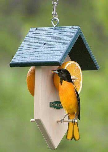 Diy Bird Houses 33 - 45+ Charming DIY Bird House Ideas For Your Backyard