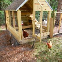 Diy Chicken Coops 19 214x214 - Coolest DIY Chicken Coop Ideas for Your Birds
