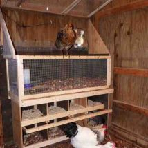 Diy Chicken Coops 30 214x214 - Coolest DIY Chicken Coop Ideas for Your Birds