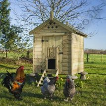 Diy Chicken Coops 35 214x214 - Coolest DIY Chicken Coop Ideas for Your Birds