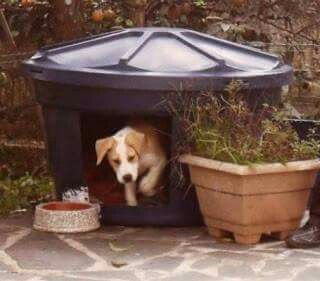 Diy Dog Houses 10 - 40+ DIY Dog House Ideas Your Dog Will Absolutely Love
