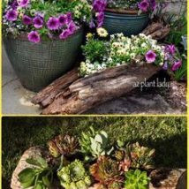 Diy Fairy Gardens 18 214x214 - 50 Magical DIY Fairy Garden Ideas