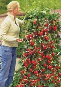 Diy Fairy Gardens 22 - 50 Magical DIY Fairy Garden Ideas