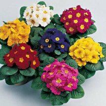 Diy Flower Vases 12 214x214 - 40+ DIY Flower Vases As Pretty As The Flowers Themselves