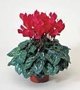 Diy Flower Vases 13 - 40+ DIY Flower Vases As Pretty As The Flowers Themselves