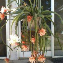 Diy Flower Vases 26 214x214 - 40+ DIY Flower Vases As Pretty As The Flowers Themselves