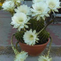 Diy Flower Vases 27 214x214 - 40+ DIY Flower Vases As Pretty As The Flowers Themselves