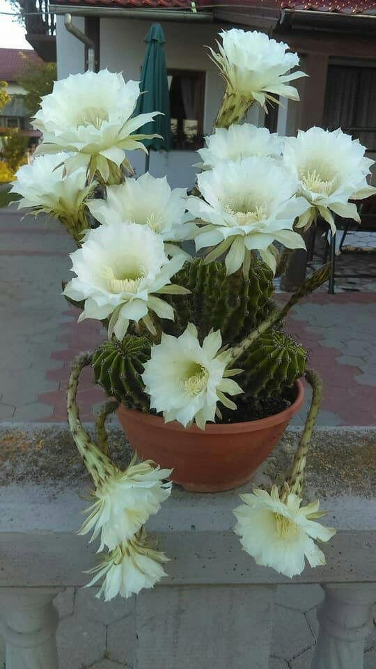 Diy Flower Vases 27 - 40+ DIY Flower Vases As Pretty As The Flowers Themselves