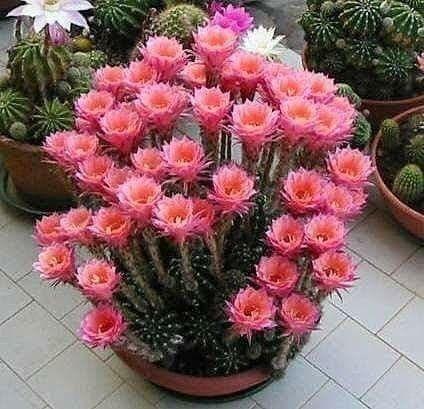 Diy Flower Vases 29 - 40+ DIY Flower Vases As Pretty As The Flowers Themselves