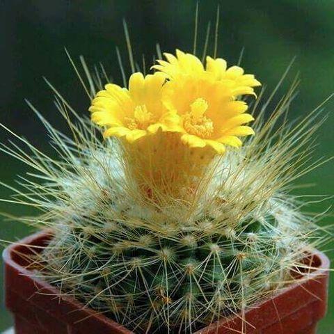 Diy Flower Vases 41 - 40+ DIY Flower Vases As Pretty As The Flowers Themselves