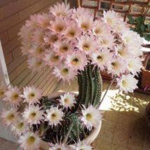Diy Flower Vases 42 214x214 - 40+ DIY Flower Vases As Pretty As The Flowers Themselves