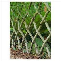 Diy Living Fence Art 12 214x214 - Heart-Stopping DIY Living Fence Art Ideas