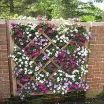 Diy Living Fence Art 22 214x214 - Heart-Stopping DIY Living Fence Art Ideas