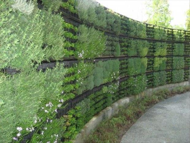 Diy Living Fence Art 37 - Heart-Stopping DIY Living Fence Art Ideas