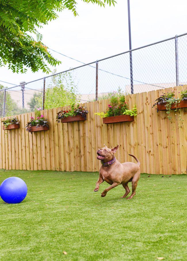 Diy Living Fence Art 5 - Heart-Stopping DIY Living Fence Art Ideas