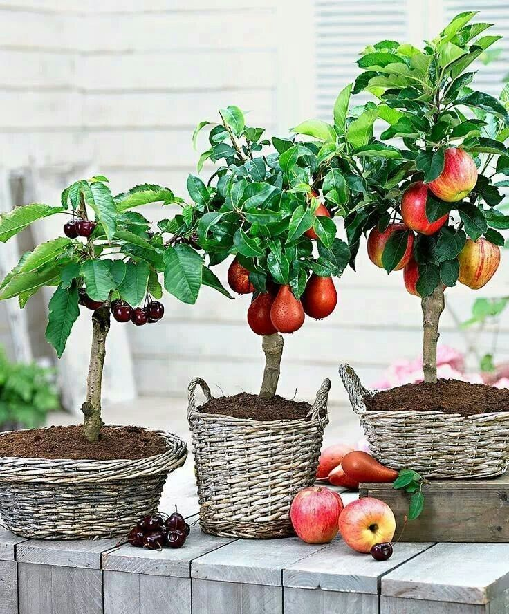 Diy Raised Planters 32 - Best DIY Raised Planters Ideas You Can Find