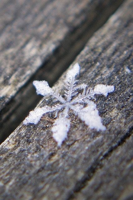 Diy Snowflakes 42 - Coolest DIY Snowflakes You Can Make Easily
